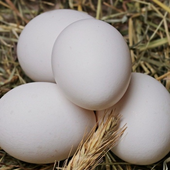 Chicken Eggs, 1 Dozen